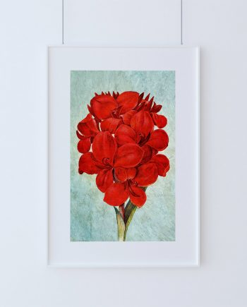 Amaryllis decor Amaryllis art Amaryllis gift botanical print Amaryllis kitchen decor Amaryllis print Amaryllis wall decor Amaryllis wall art