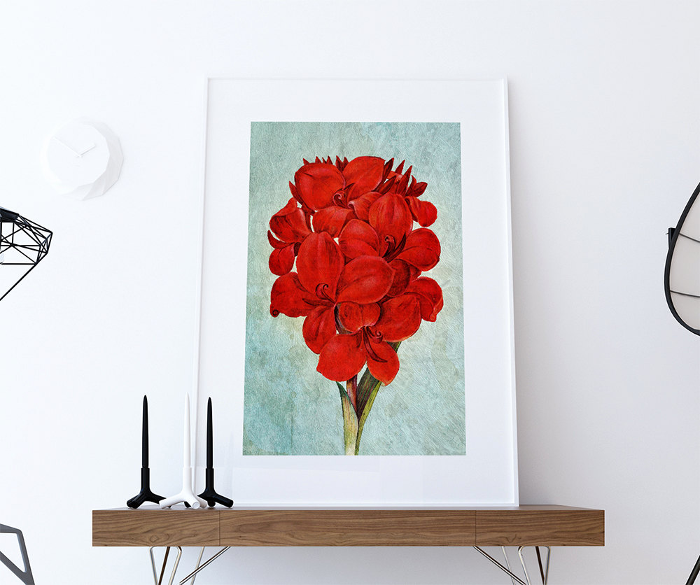 Amaryllis decor amaryllis art amaryllis gift botanical for Art prints for kitchen wall