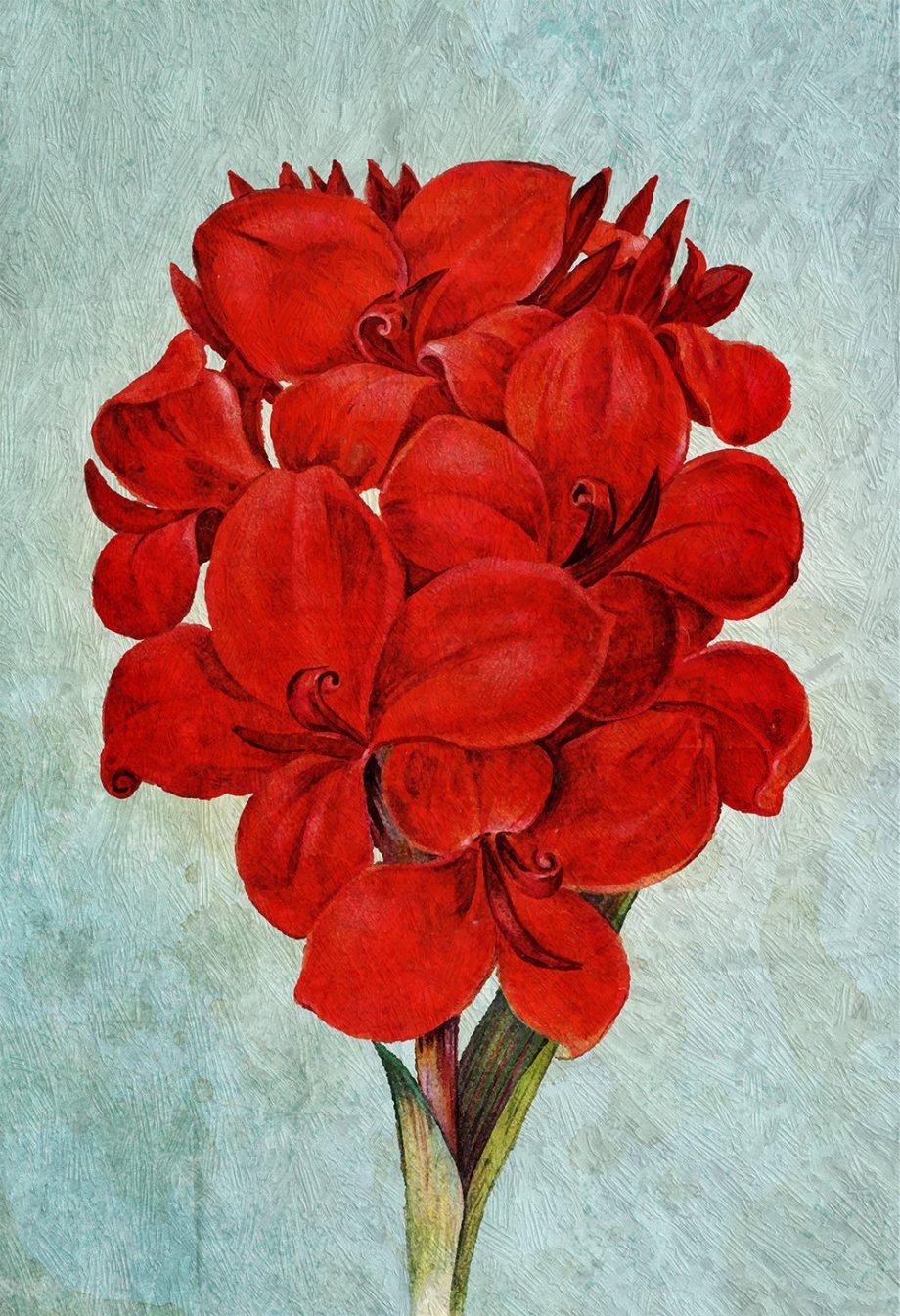 Amaryllis decor art Flower botanical Amaryllis print kitchen decor Floral Amaryllis print wall decor floral wall art - Large Giclee Canvas