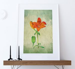 asiatic-lily-decor-lily-art-asiatic-lily-gift-botanical-print-flower-kitchen-decor-floral-print-floral-wall-decor-wall-art-canvas-5817b67e1.jpg