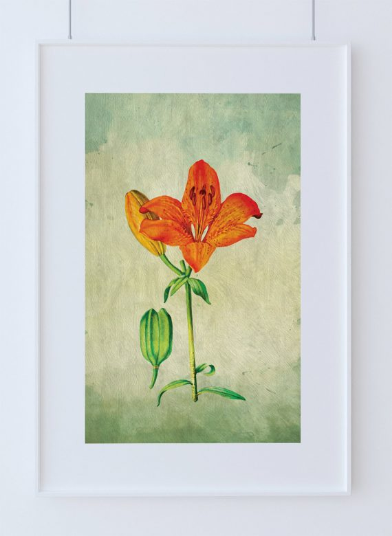 Asiatic Lily decor Lily art Asiatic Lily gift botanical print flower kitchen decor floral print floral wall decor wall art Canvas
