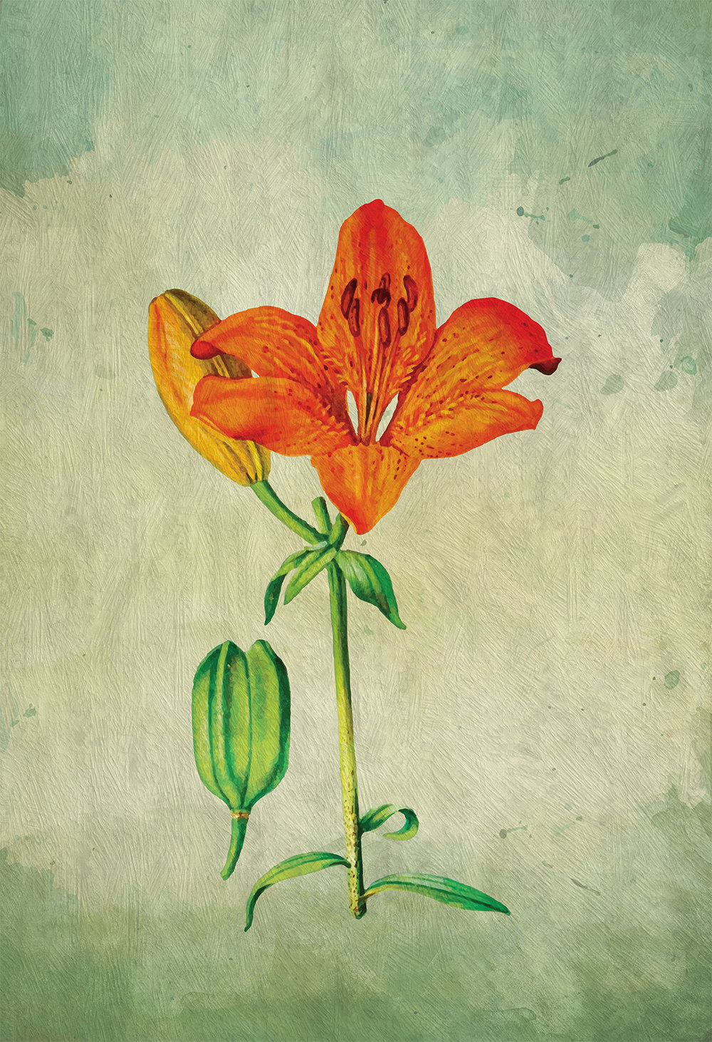 Asiatic Lily decor Lily art Asiatic Lily gift botanical print flower ...