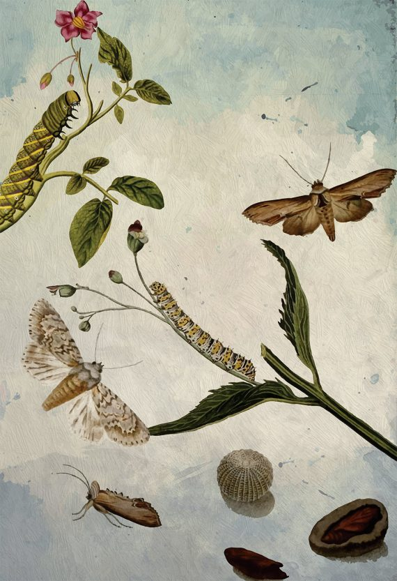 Butterfly decor Moth art Camellia gift botanical Natural Botanical print decor Moth print butterfly wall decor Caterpillar wall art Canvas