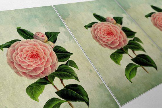 Camellia decor Camellia art Camellia gift botanical print flower kitchen decor floral print floral wall decor Camellia wall art Canvas