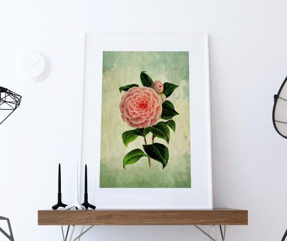 Camellia Print Camellia art Camellia botanical print flower kitchen decor floral print floral wall decor Camellia wall art - Large Giclee