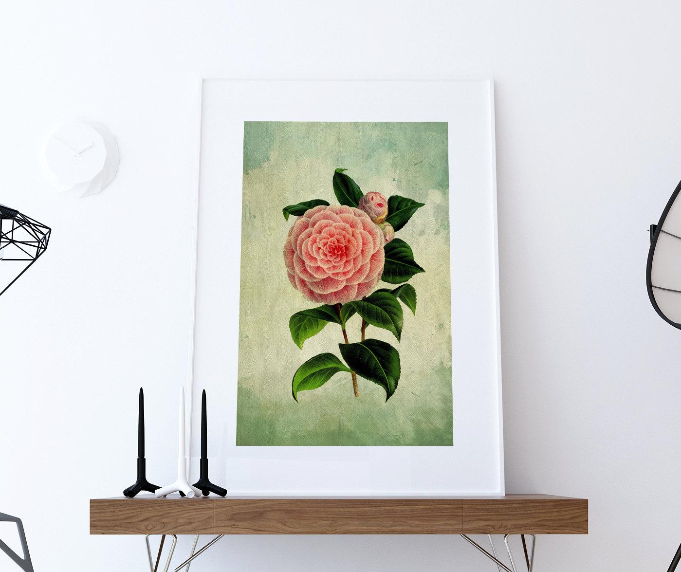Pink Camellia Vintage Botanical Floral Illustration Art Poster 24x36