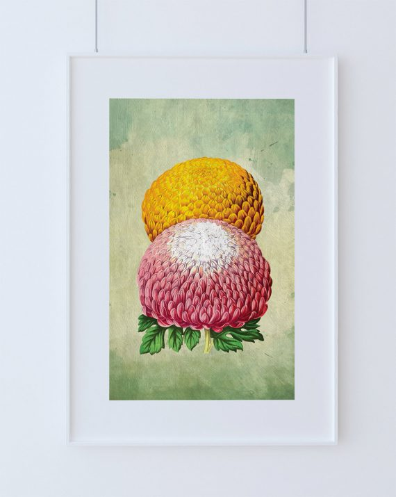 Chrysanthemum Print Chrysanthemum art botanical print flower kitchen decor floral print floral wall decor wall art - Large Giclee