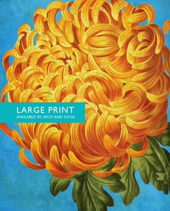 Chrysanthemum Print Chrysanthemum art botanical print flower kitchen decor floral print floral wall decor wall art - Large Giclee