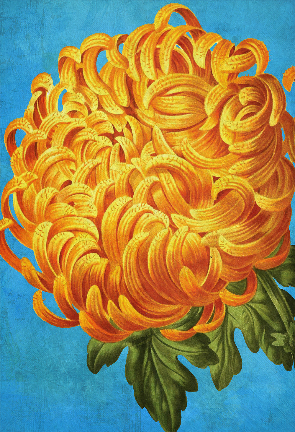Chrysanthemum Print Chrysanthemum art botanical print flower kitchen ...