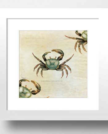 "Crab Beach Print 24x24"" Vintage Art Print Vintage Nautical Decor Ocean Wall Art - Giclee Print on Cotton Canvas and Satin Photo Paper"
