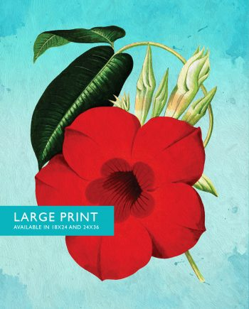 Dipladenia decor Dipladenia art Dipladenia gift botanical print flower decor floral print floral wall art Canvas or Satin Photo Paper