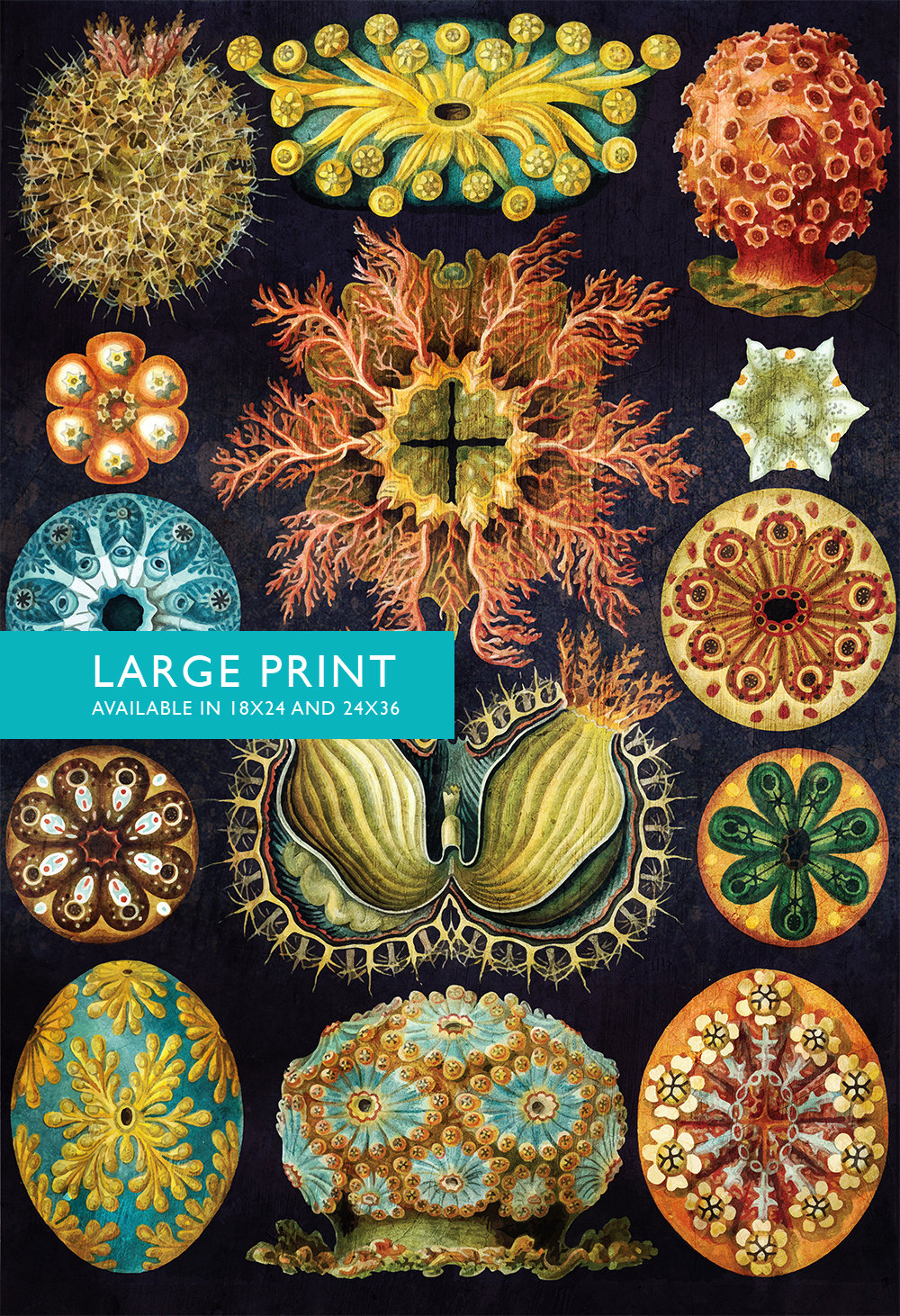 Ernst haeckel ascidiae print sea coral art vintage for Vintage ocean decor