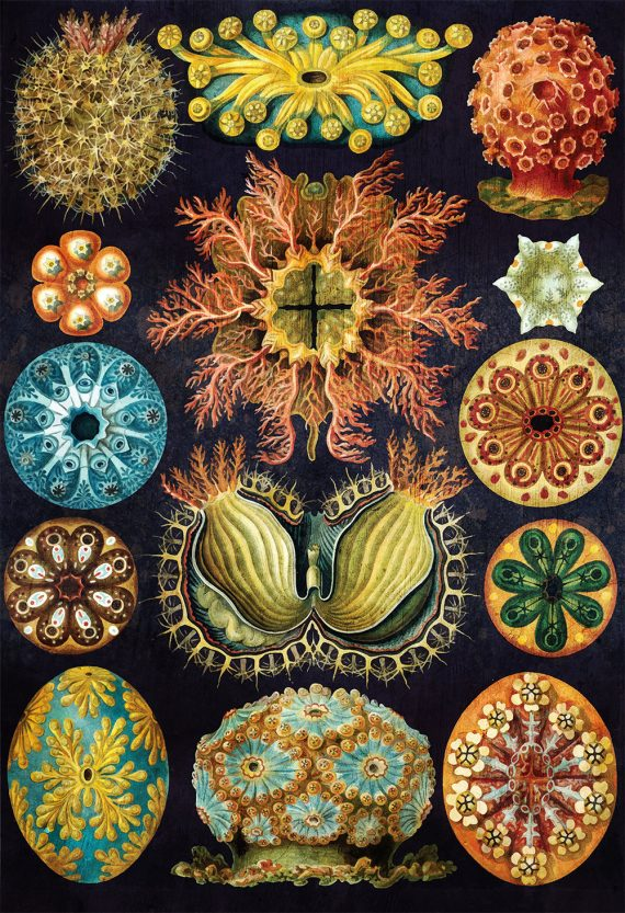 Ernst Haeckel Ascidiae Print Sea Coral Art Vintage Nautical Decor Ocean Wall Art - Giclee Print on Canvas & Satin