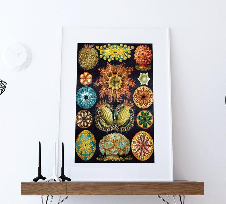Ernst Haeckel Ascidiae Print Sea Coral Art Vintage Nautical Decor Ocean Wall Art - Giclee Print on Cotton Canvas and Paper Canvas