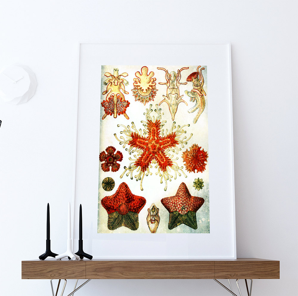 Ernst haeckel asteridea print starfish art vintage for Vintage ocean decor