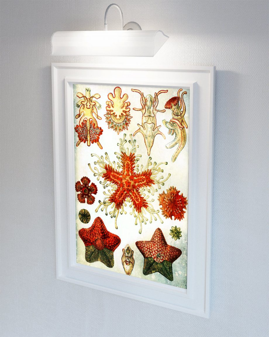 Ernst Haeckel Asteridea Print Starfish Art Vintage Nautical Decor Ocean Wall Art - Giclee Print on Cotton Canvas and Paper Canvas