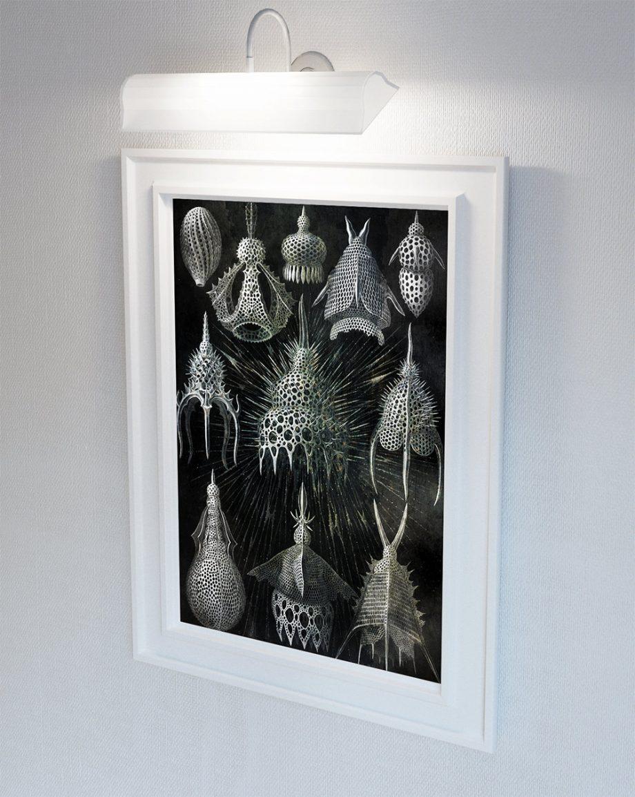 Ernst Haeckel Cyrtoidea Print Shell Formations Art Vintage Nautical Decor Ocean Wall Art - Giclee Print on Canvas & Satin