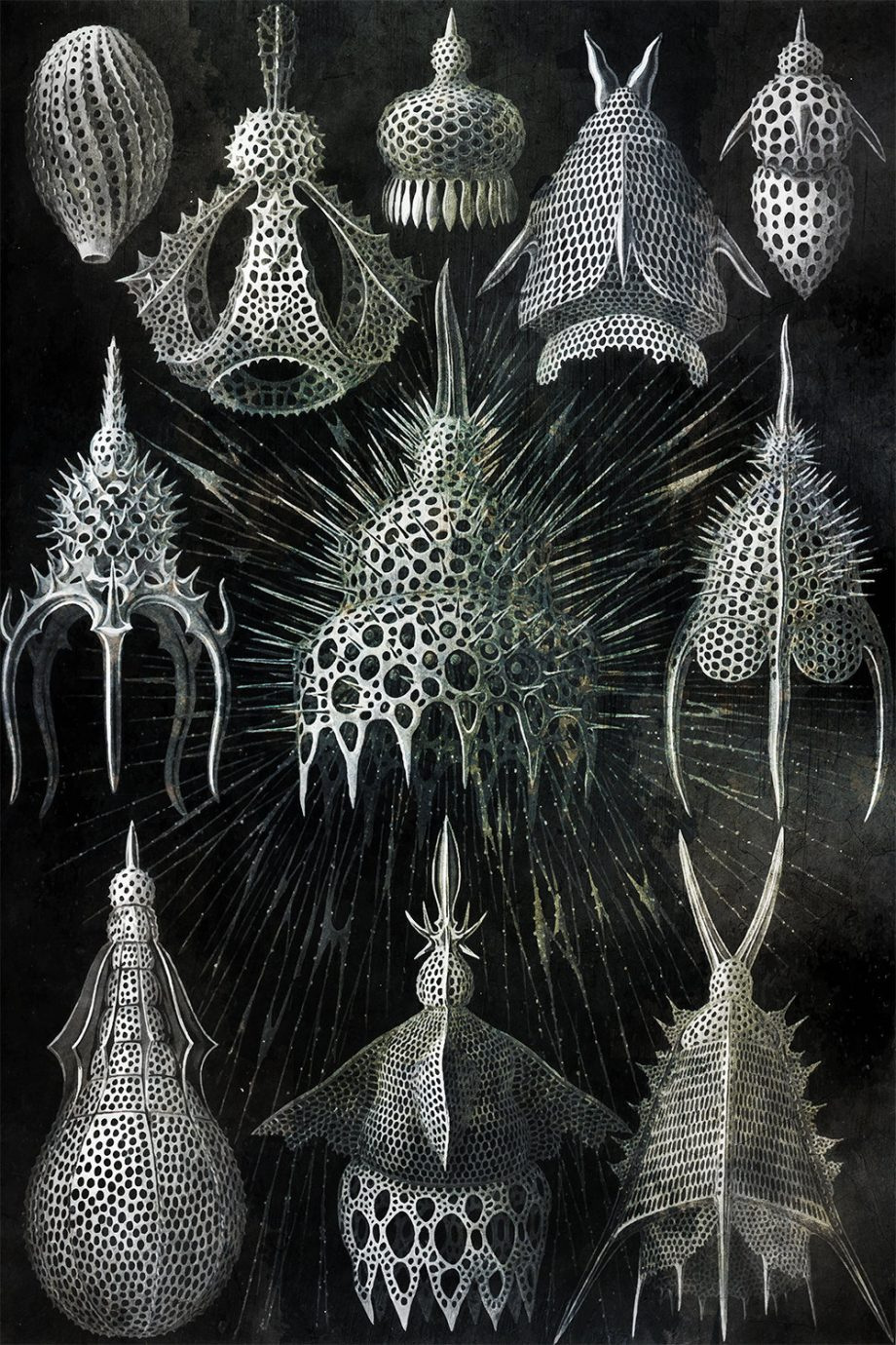 ernst-haeckel-cyrtoidea-print-shell-formations-art-vintage-nautical-decor-ocean-wall-art-giclee-print-on-cotton-canvas-and-paper-canvas-5817b3114.jpg