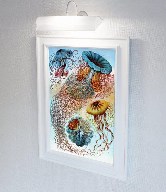 Ernst Haeckel Discomedusae Print Jellyfish Art Vintage Nautical Decor Ocean Wall Art - Giclee Print on Cotton Canvas and Paper Canvas