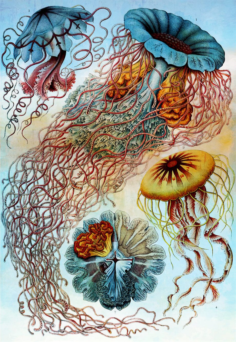 Ernst Haeckel Discomedusae Print Jellyfish Art Vintage Nautical Decor Ocean Wall Art - Giclee Print on Cotton Canvas and Paper Canvas