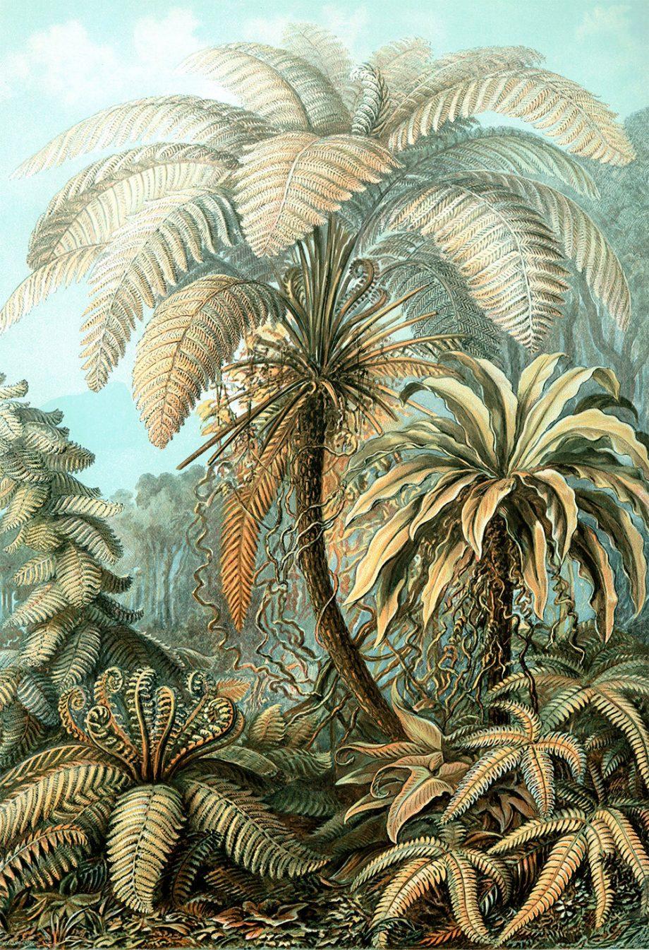 Ernst Haeckel Filicinae Print Tropical Art Vintage Decor Ocean Wall Art - Giclee Print on Canvas & Satin