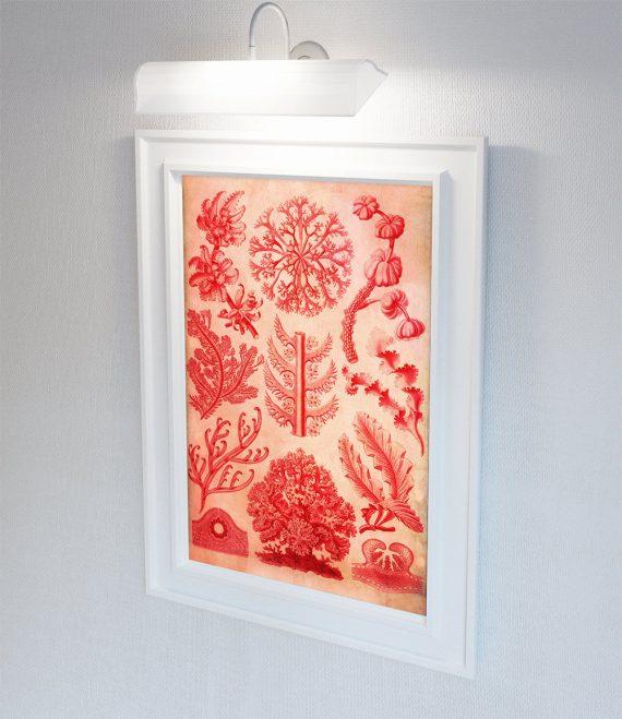 Ernst Haeckel Florideae Print Algæ Art Vintage Nautical Decor Ocean Wall Art - Giclee Print on Cotton Canvas and Paper Canvas
