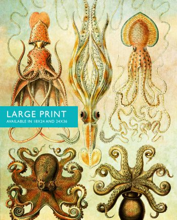 Ernst Haeckel Gamochonia Print Octopus and Squid Art Vintage Nautical Decor Ocean Wall Art - Giclee Print on Canvas & Satin