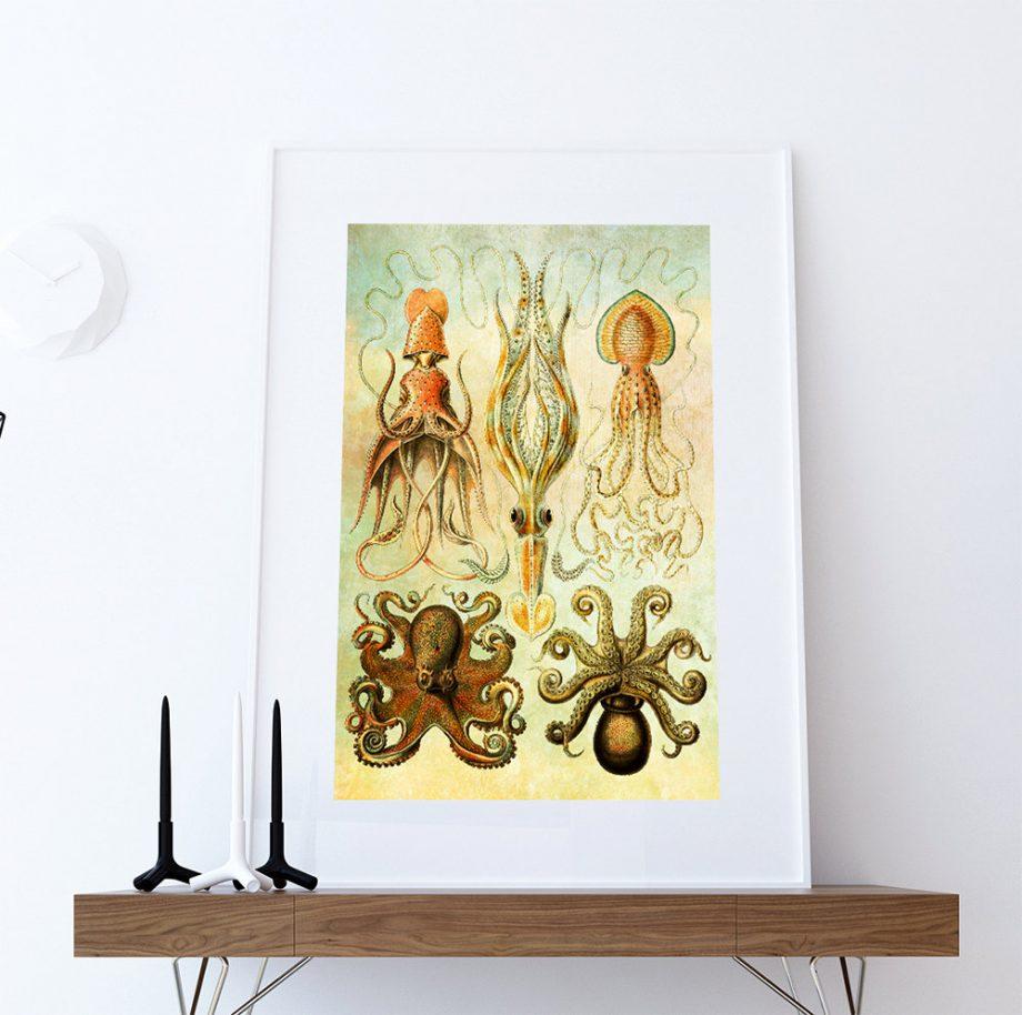 Ernst Haeckel Gamochonia Print Octopus and Squid Art Vintage Nautical Decor Ocean Wall Art - Giclee Print on Canvas & Satin