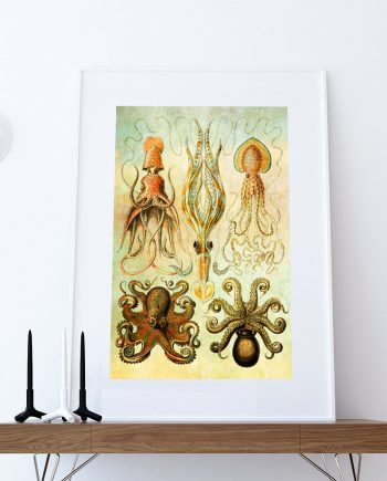 Ernst Haeckel Gamochonia Print Octopus & Squid Art Vintage Nautical Decor Ocean Wall Art - Giclee Print on Cotton Canvas and Paper Canvas