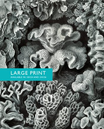 Ernst Haeckel Hexacoralla Print Sea Coral Art Vintage Nautical Decor Ocean Wall Art - Giclee Print on Canvas & Satin