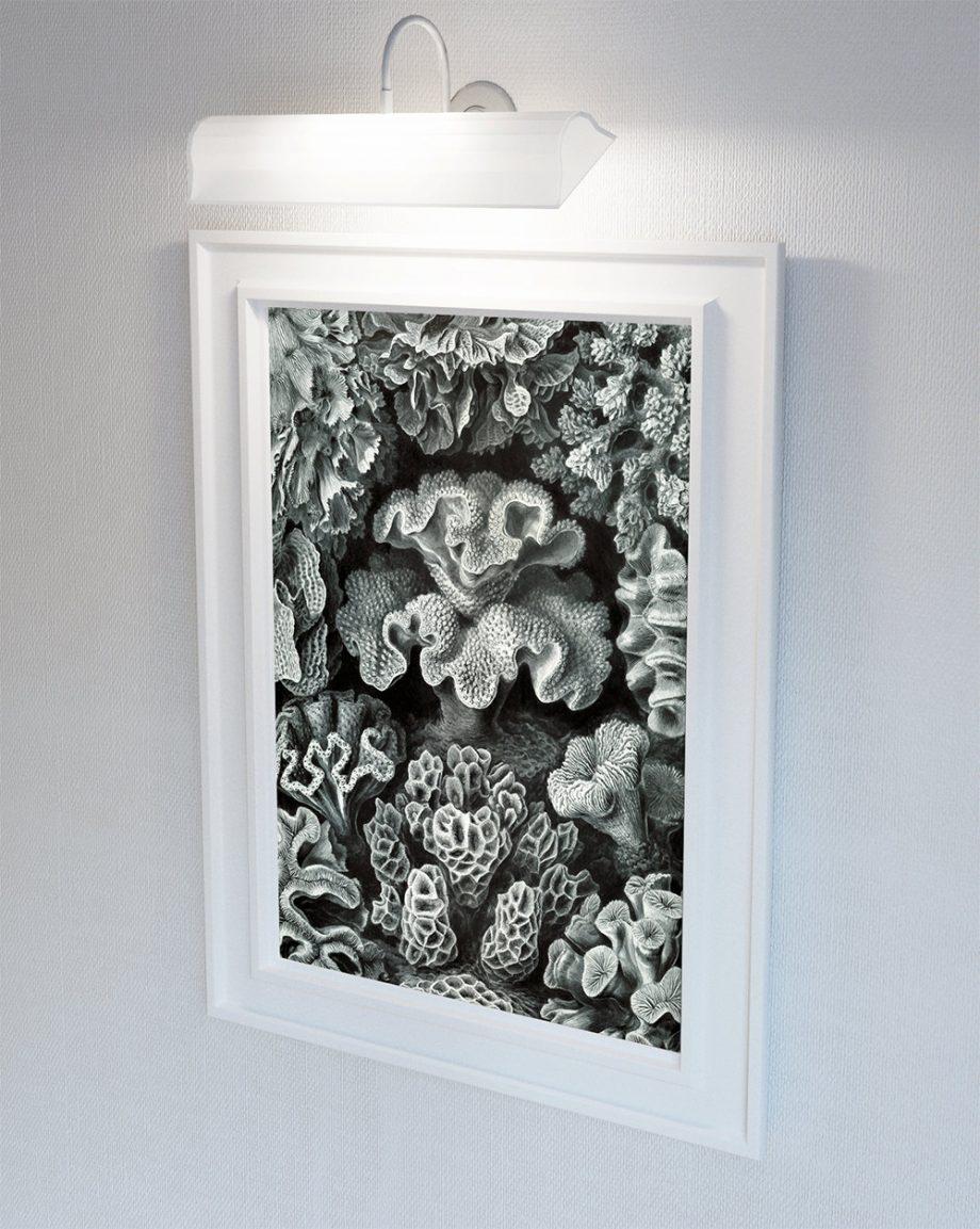 Ernst Haeckel Hexacoralla Print Sea Coral Art Vintage Nautical Decor Ocean Wall Art - Giclee Print on Canvas & Satin