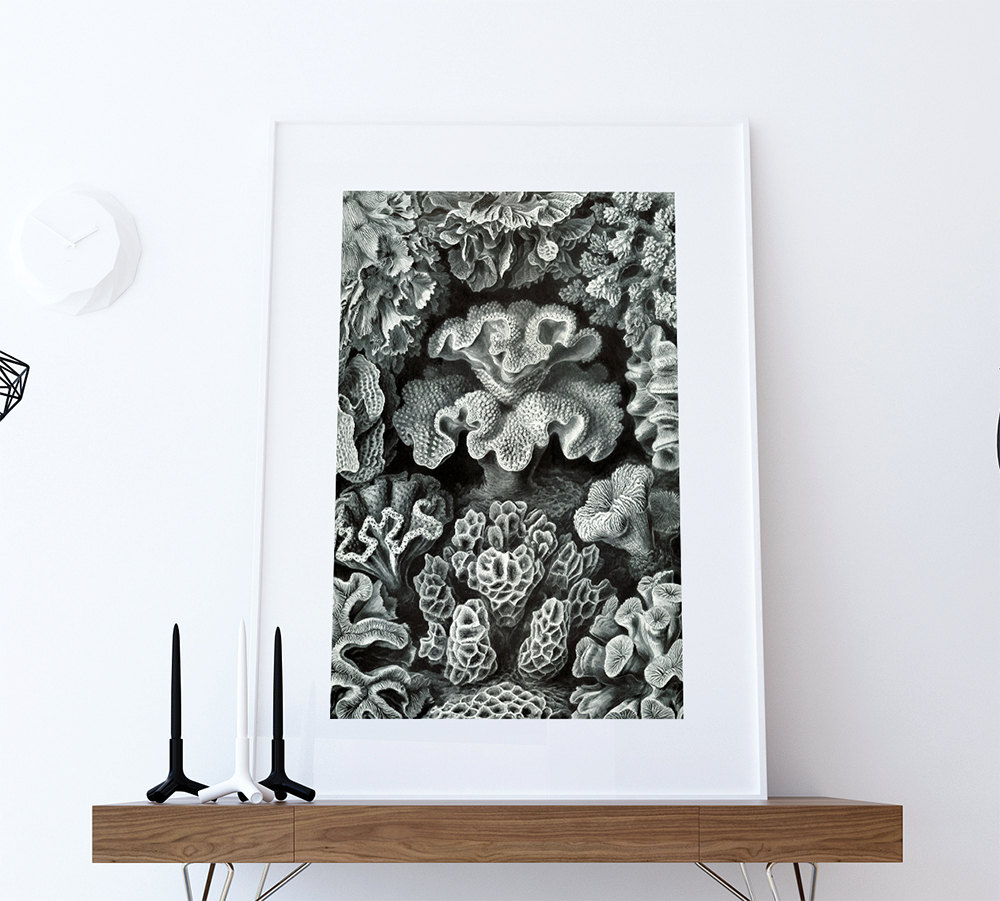 Ernst haeckel hexacoralla print sea coral art vintage for Vintage ocean decor