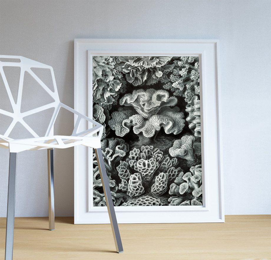 Ernst Haeckel Hexacoralla Print Sea Coral Art Vintage Nautical Decor Ocean Wall Art - Giclee Print on Cotton Canvas and Paper Canvas