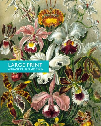 Ernst Haeckel Orchidae Print Orchids Art Vintage Nautical Decor Ocean Wall Art - Giclee Print on Canvas & Satin