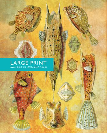 Ernst Haeckel Ostraciontes Print Boxfish Art Vintage Nautical Decor Ocean Wall Art - Giclee Print on Canvas & Satin