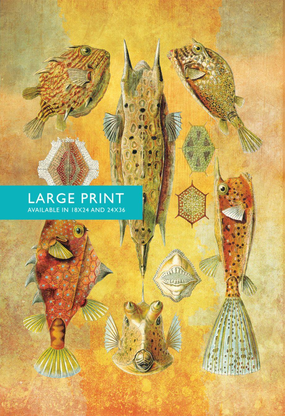 Ernst Haeckel Ostraciontes Print Boxfish Art Vintage Nautical Decor Ocean Wall Art - Giclee Print on Canvas & Satin