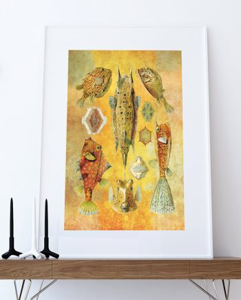 Ernst Haeckel Ostraciontes Print Boxfish Art Vintage Nautical Decor Ocean Wall Art - Giclee Print on Cotton Canvas and Paper Canvas