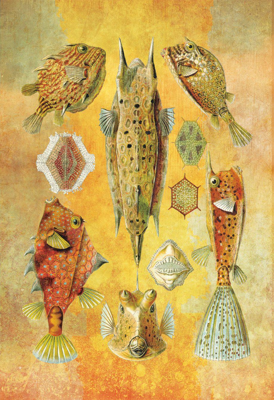 Ernst Haeckel Ostraciontes Print Boxfish Art Vintage Nautical Decor Ocean Wall Art - Giclee Print on Cotton Canvas and Paper Canvas