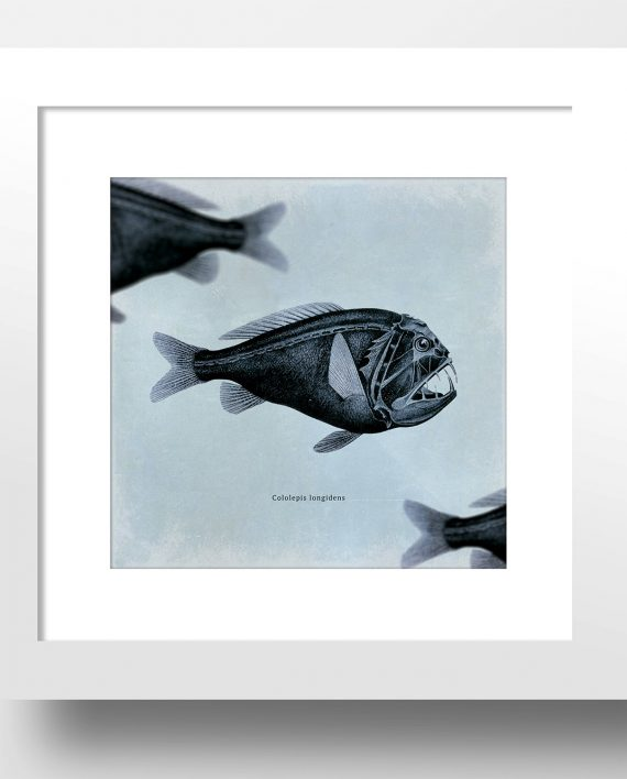 Fish beach print 24 24 vintage art print vintage nautical for Vintage ocean decor