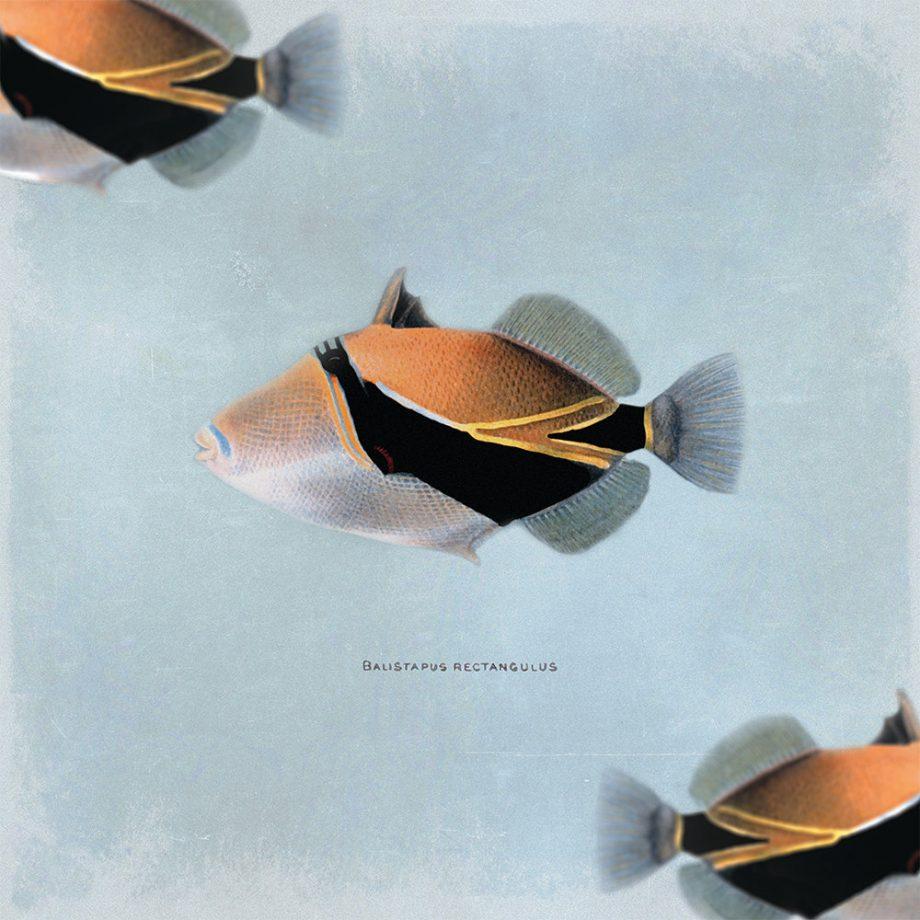 Fish Vintage Print 24x24 Vintage Beach Art Print Vintage Nautical Decor Ocean Wall Art - Giclee Print on Cotton Canvas and Satin Photo Paper
