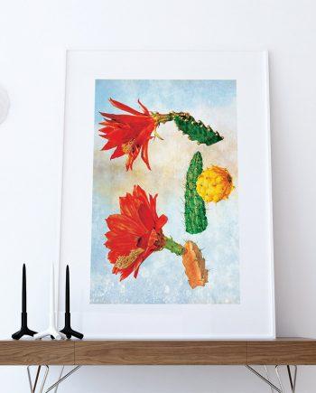 Flowering Cactus Print art Cacti gift botanical print flower decor floral print floral wall decor wall art Canvas