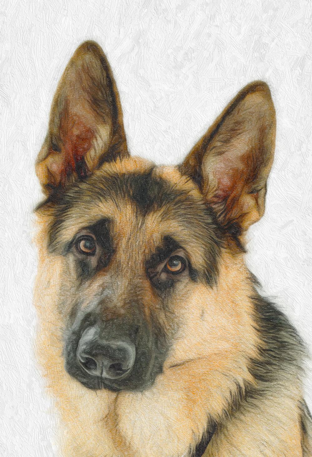 German Shepherd Dog Print Illustration Art Print Poster Giclee On Cotton Canvas And Satin Photo Paper Welovecmyk