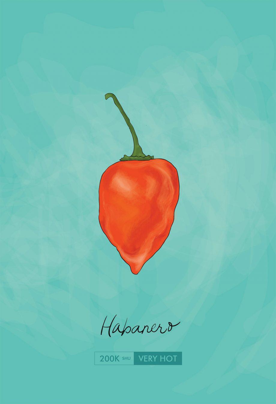 Habanero Chili Pepper Kitchen Giclee Art Print Cotton Canvas and Paper Canvas Mexican Rustic Chile Theme Wall Decor