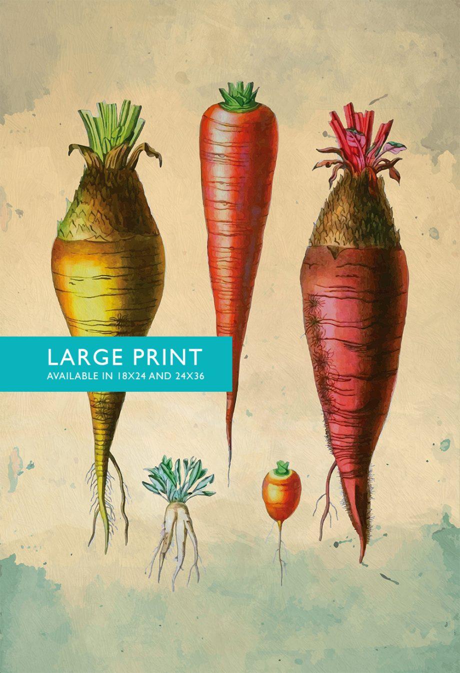 Kitchen Print Kitchen Decor Carrot Varities Art Rustic Farmhouse Giclee Vegan Print Vegetable Print on Cotton Canvas and Satin Photo Paper