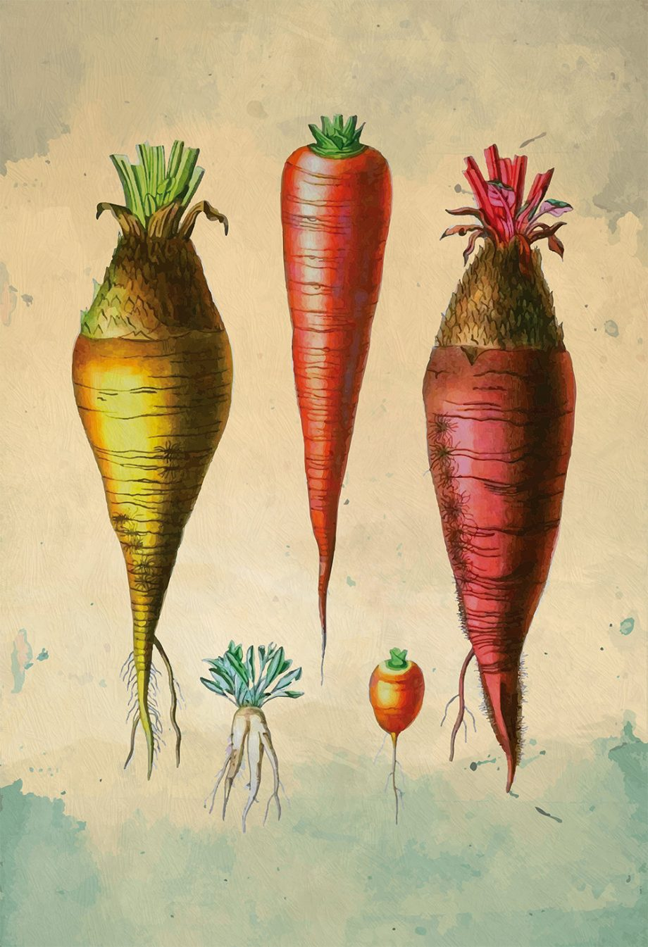 Kitchen Print Kitchen Decor Carrot Varities Art Rustic Farmhouse Giclee Vegan Print Vegetable Print on Cotton Canvas and Satin Photo Paper