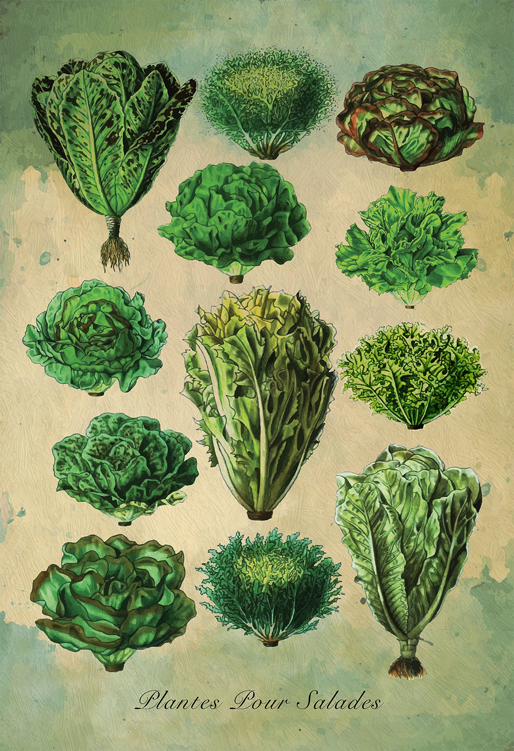Kitchen Print Kitchen Decor Lettuce Art Rustic Farmhouse Giclee ...