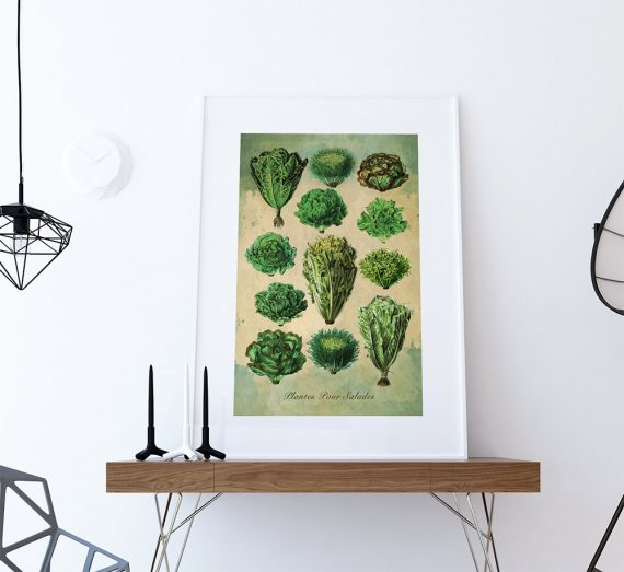 Kitchen Print Kitchen Decor Lettuce Rustic Farmhouse Giclee Vegan Print Vegetable Print on Cotton Canvas and Satin Photo Paper