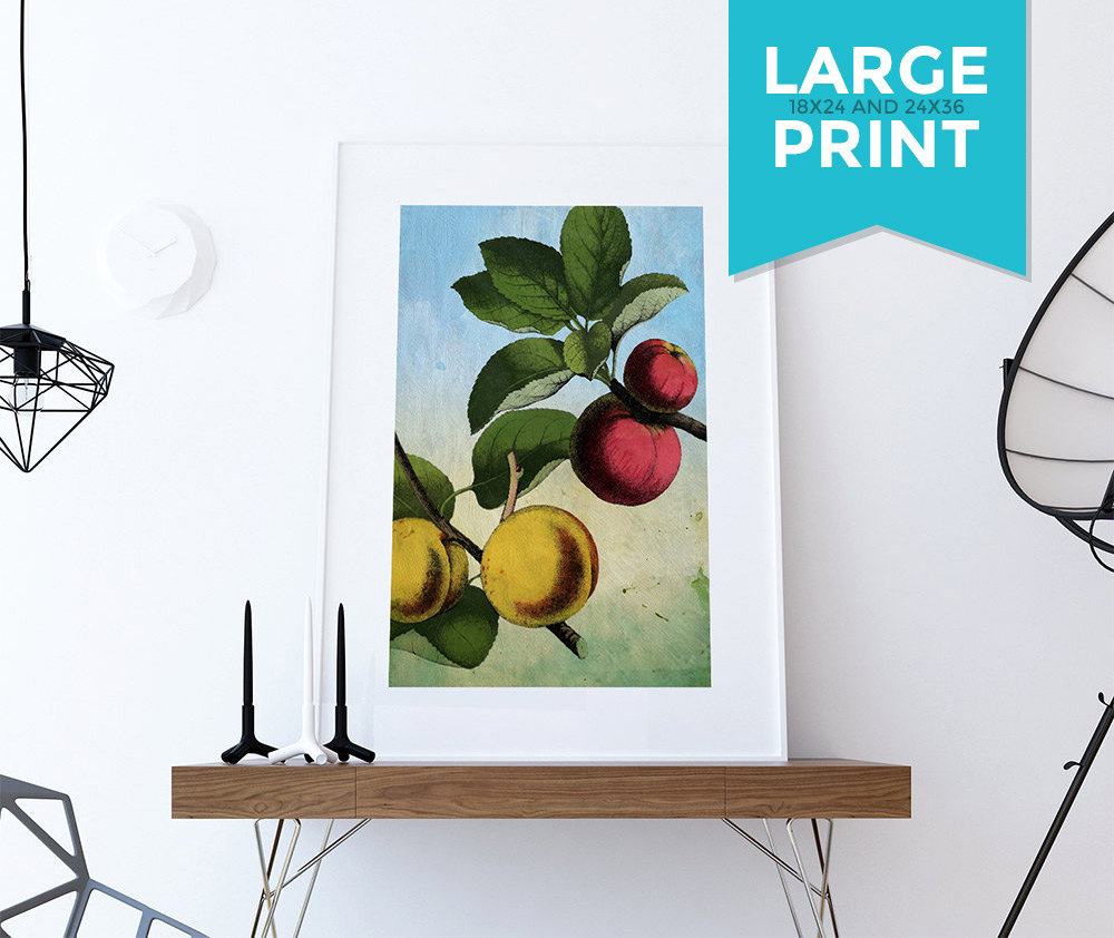 Apple Wall Decor For Kitchen