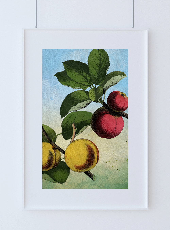 Kitchen Wall Art Apple Apricot Print Kitchen Print Food Photograph