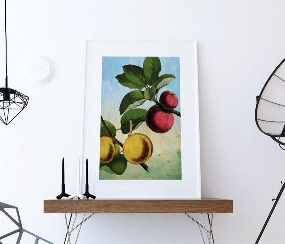 Kitchen Wall Art Apple Apricot Print Kitchen Print Food Photograph Fruit  Print Vintage Botanical Art Retro Kitchen Art Kitchen Wall Decor